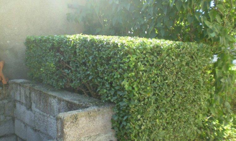 LB Paysage Brioude - Paysagiste pour l'entretien de parcs et jardins
